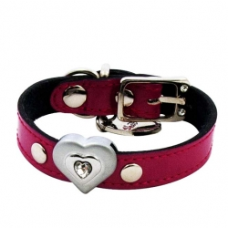 Collars, Leashes and Halters