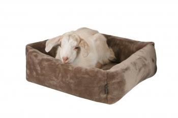 Cube - Лежак для кошек и собачек
